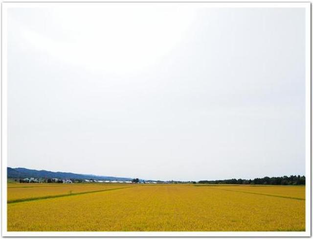 画像: カレーですよ4328(旭川 スサンタキッチン)北のスリランカ。