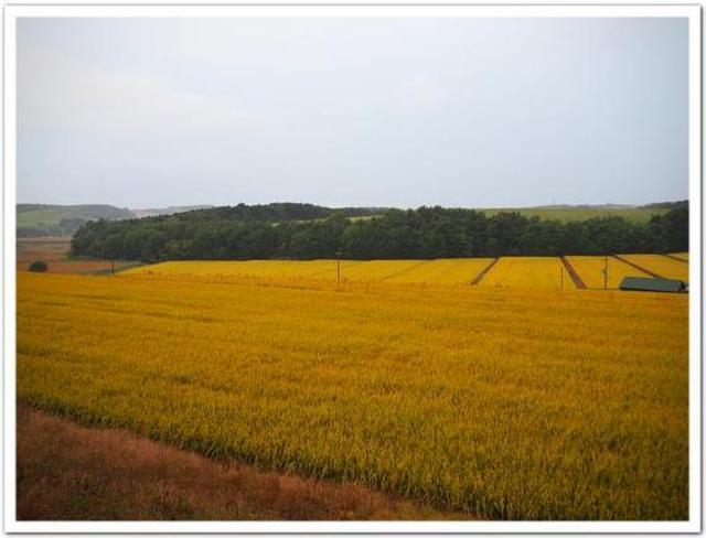 画像: カレーですよ4331(旭川 アプランティ)雨のカレーカフェ。