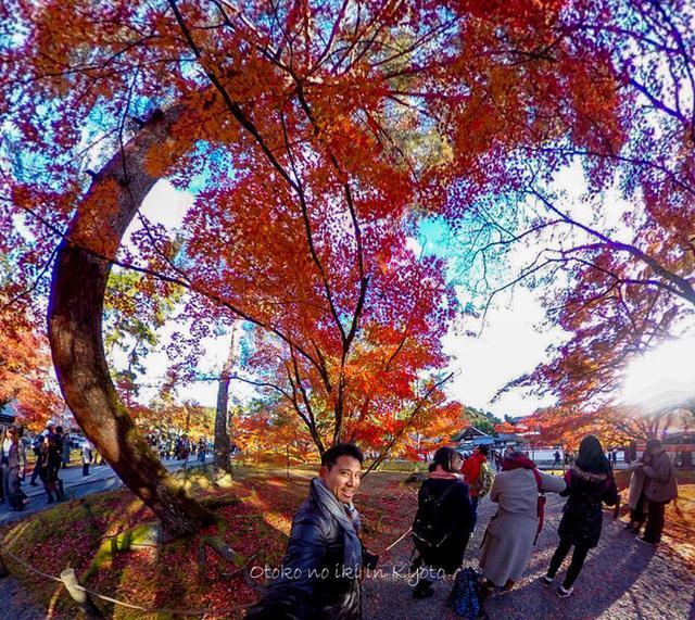 画像: いざ錦秋の京都へ