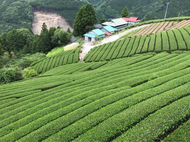 画像: 静岡県静岡市 大川のさらに奥の縁側カフェでお茶をいただきました