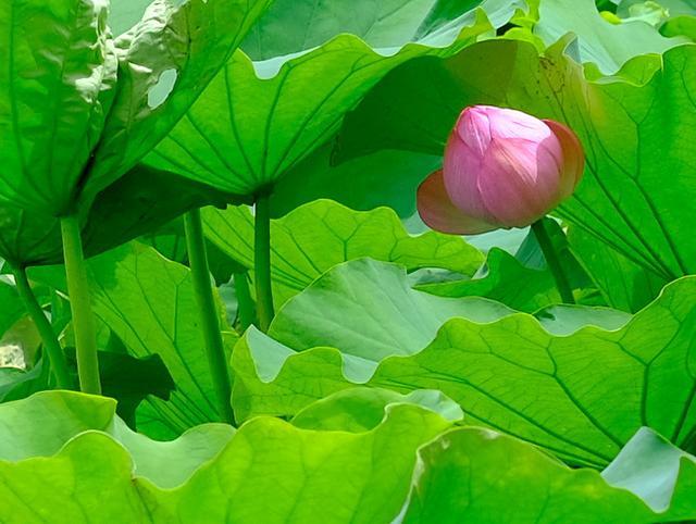 画像: 「上野御徒町 上野風月堂の生ゴーフルと上野公園 蓮の花」