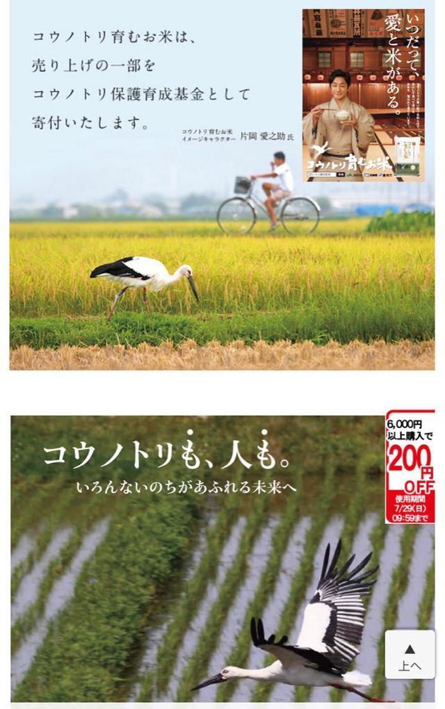 画像: 絶滅危惧農業!コウノトリ育むお米と上野のパンダの関係