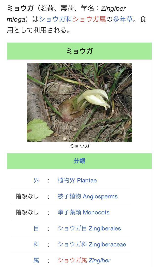画像: 野菜クイズ!土の上に生える薄いクリーム色の花の正解は?お答えいたしま〜す!