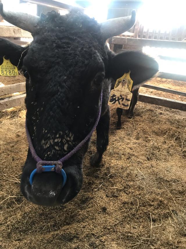 画像: みんながイキイキ助け合い支えあっておいしい牛づくり!