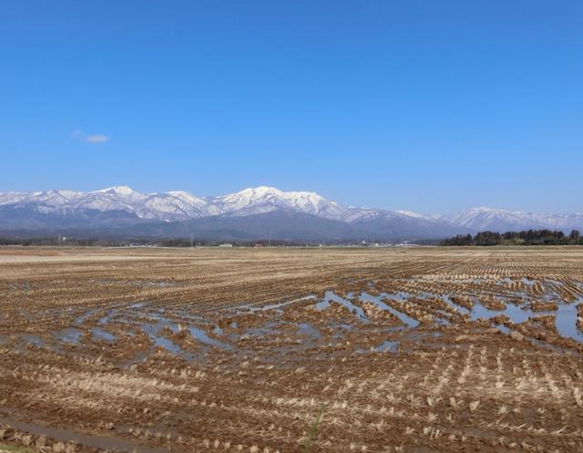 画像: 佐渡の田んぼでトキに会いました!島のみんなでトキと共生する〜世界農業遺産
