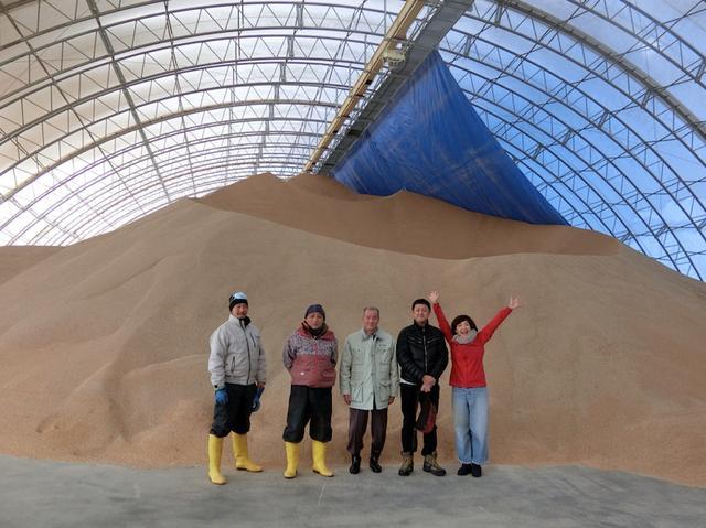 画像: なんの山かわかりますかー。青森県つがる平野のお米の山!飼料米で耕畜連携!