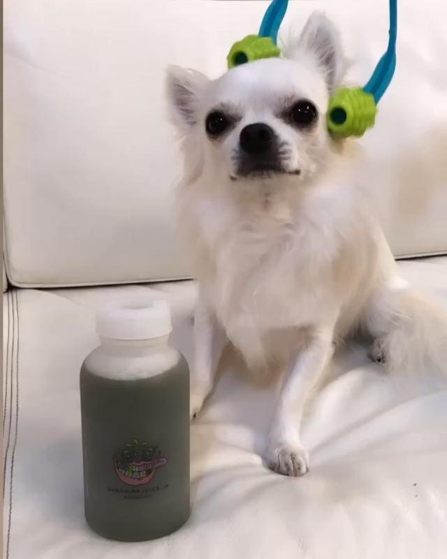 画像: ジュースクレンズ3日間生活、2日目。  【09:45】2本目は「デイリージュース」ケール、モリンガ、レモン、りんご。 さっぱり飲みやすくて美味しい♡  愛犬二郎が「わんこの癒し」で癒されているのを見ながらゴクゴク♡  #サンシャインジュ...