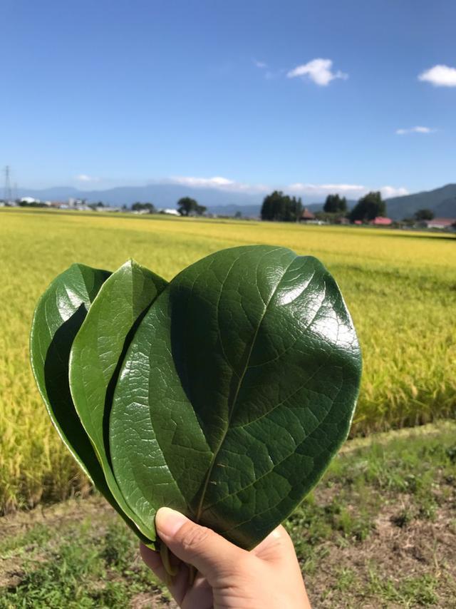 画像: 会津のみしらず柿を受け継ぐ家族を訪ねました