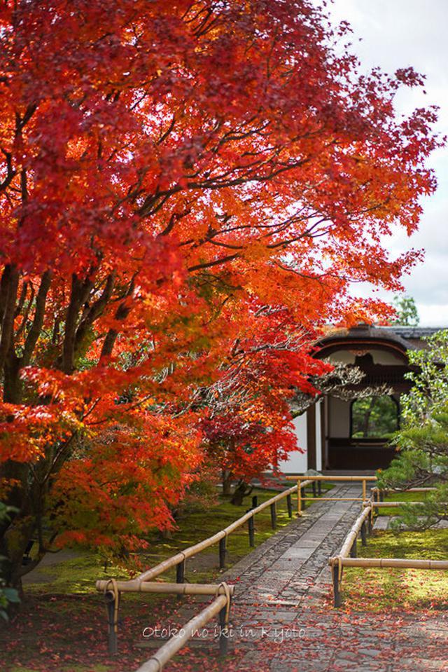画像: そうだ 京都、行こう。 2019