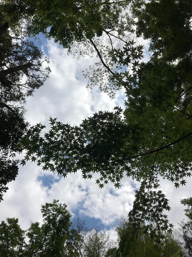 画像: 森でコロッケを食べていたら思わぬ客人におどろかされたという昨日の話。
