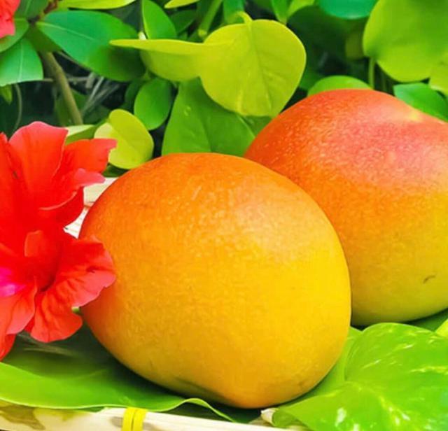 画像: 食べて応援!生産者支援とマンゴー おすすめ / 沖縄アララガマ農園
