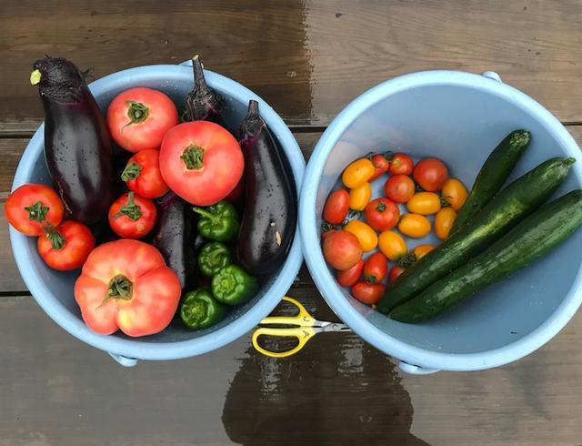 画像: 東京も暴風雨になっていましたが、昨日のうちに収穫に行ってきました。そこで野菜の重さ当てクイズです