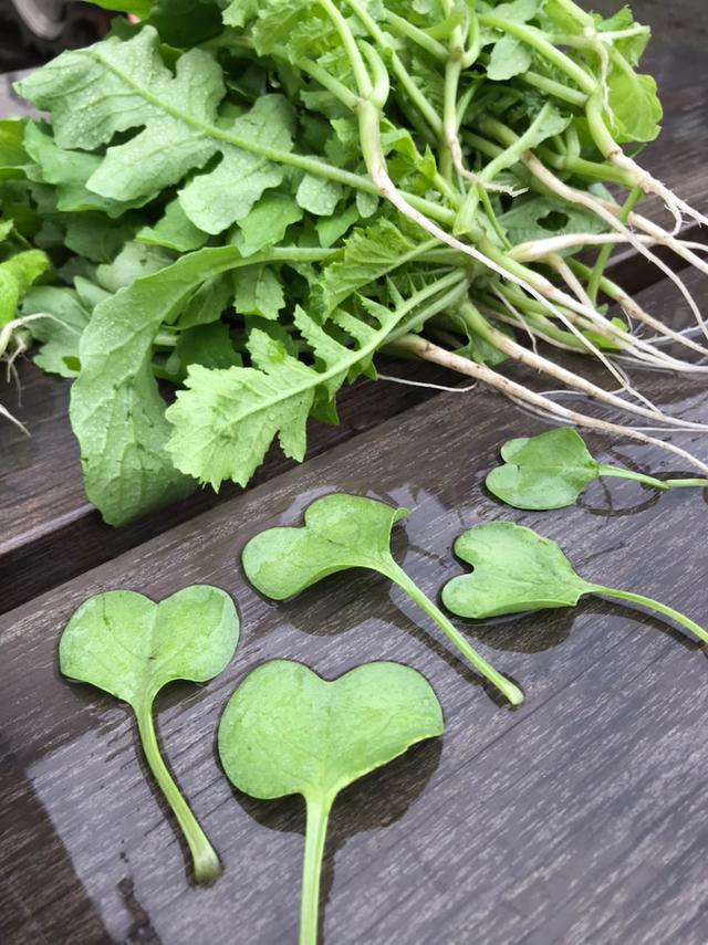 画像: 白菜と大根の間引き仕事とかきゅうりのこととか、畑しながら考えたこと。