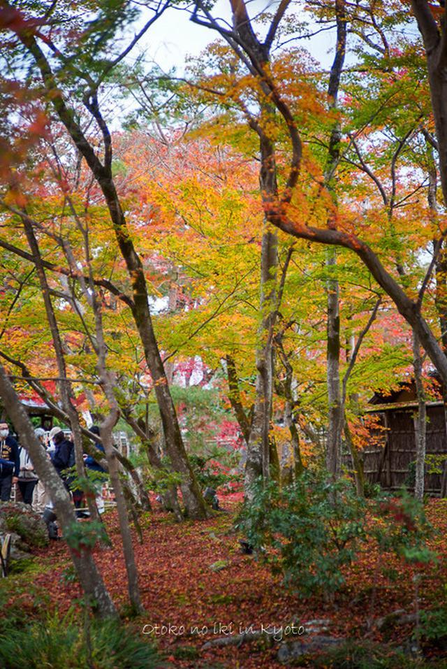 画像: 紅葉の見頃の話(京都)