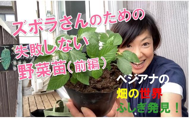 画像: 都会の小さなベランダやお庭で農ライフ始めよう!ズボラさんでも失敗しにくい野菜の苗の選び方