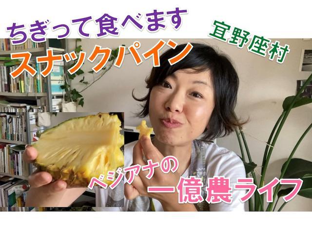 画像: ちぎって食べます! スナックパイン! 宜野座村のすーきパイン農園さんから届きました!