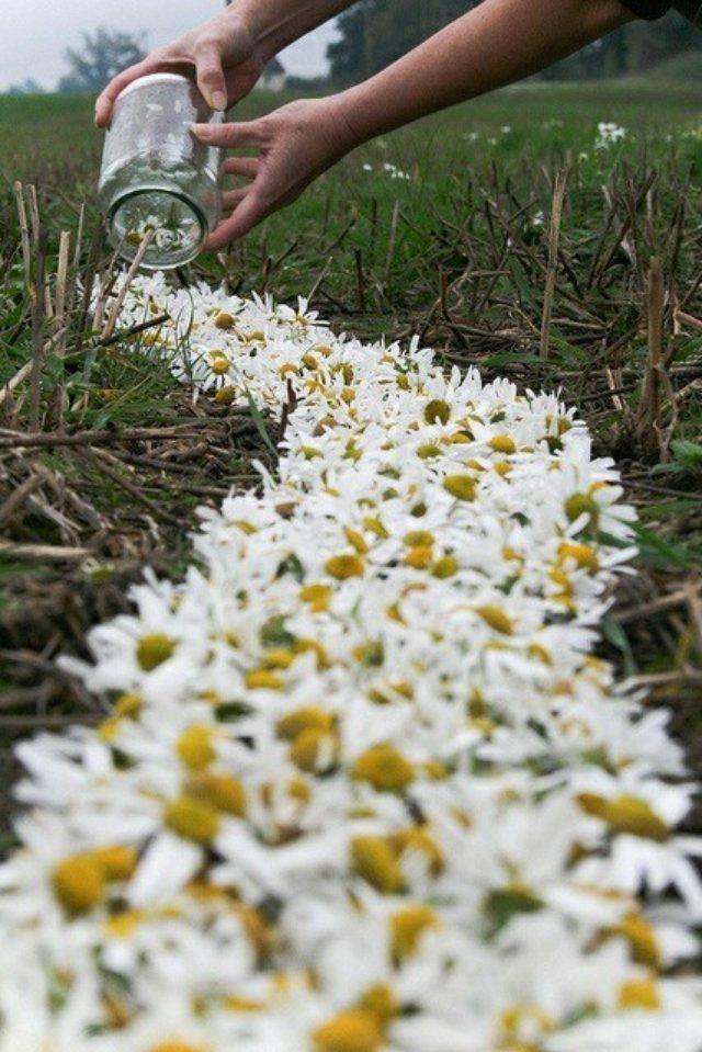 画像: 花の道