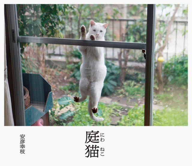 画像: 家で飼う猫と庭に住み着いた猫と飼い主の日常 ちょっと奇妙で切ない写真集『庭猫』