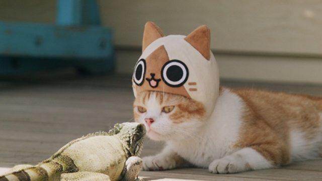 画像: 「モンハン」アイルーの帽子を被った猫が大活躍!? ゲーム発売記念「吾輩はアイルーである。」一挙公開!