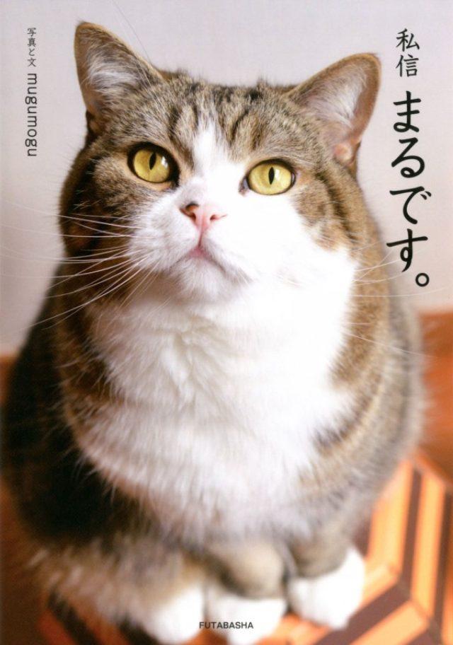 画像: YouTubeで話題になった箱に飛び込むネコ・まるの家に魔物が襲来!? ネコ好きが悶えるフォトブック『私信 まるです。』発売
