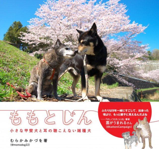 画像: 小さな甲斐犬「もも」と耳の聴こえない雑種犬「じん」が寄り添いあう姿に感動必至!