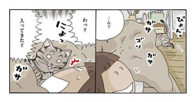 """画像: お出迎えに添い寝... """"預かりネコ""""との共同生活はメロメロの連続!"""