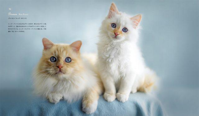 画像: 【画像あり】美しすぎる猫たちが大集合! 愛らしくもどこか気品あふれる姿が満載の写真集