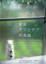 画像: けなげな猫達に笑いと涙!自由に生きる猫の写真を一同に集めた「庭猫アフとサブ写真展」