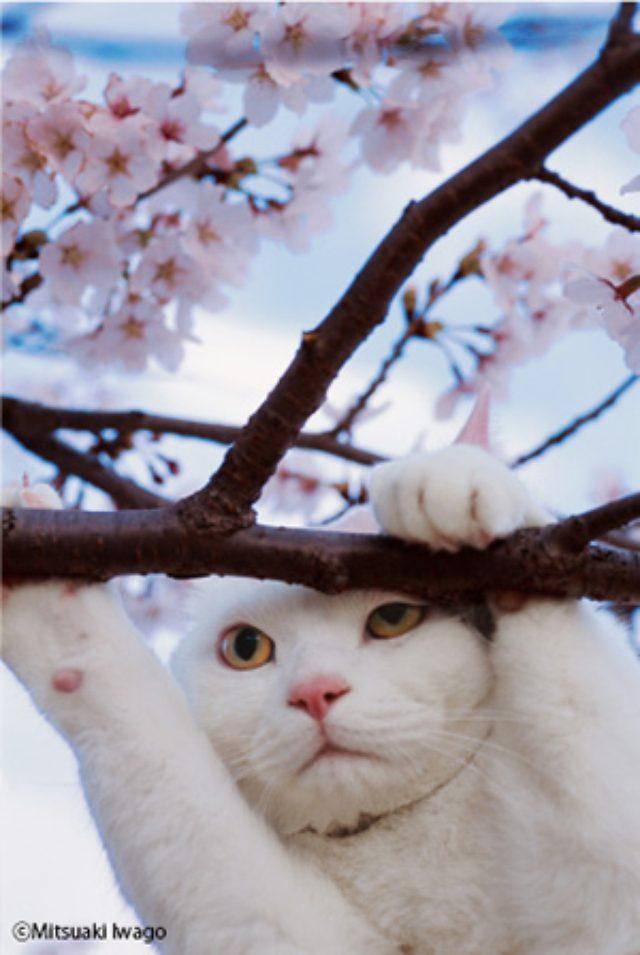"""画像: これは見に行くしかないニャ!世界のネコたちに出会える岩合光昭の""""ネコ""""写真展"""