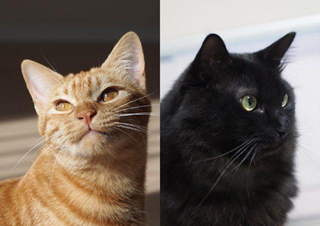 画像: 【猫の日特別企画】あの人気猫マンガの猫さんの写真集めました!ニャアアアン!