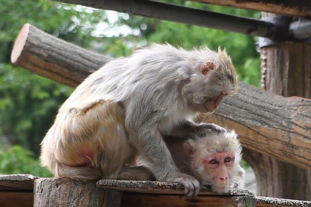 画像: サルには人間よりハードな「女子カースト」がある!? 飼育員が見た動物たちの意外すぎる生態