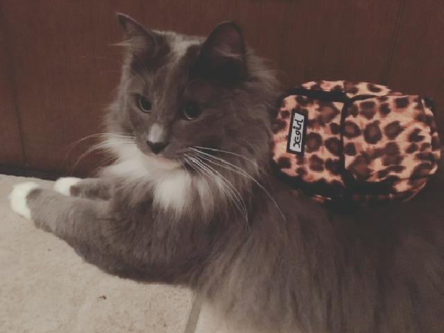 画像: SNSで話題! 愛猫に背負わせたくなる、ちいさすぎて可愛い!リュック型ポーチ
