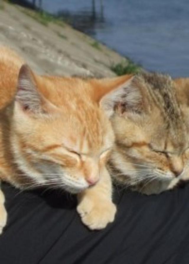 画像: 大人の夏休みの課題図書に。『川辺に生きるノラ猫たち』で考える、人間と猫とのフェアーな関係