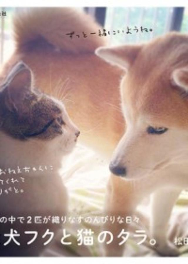 画像: 癒され度100%! 絶妙な距離感を保ちながら楽しく暮らす、柴犬フクと猫のタラ。