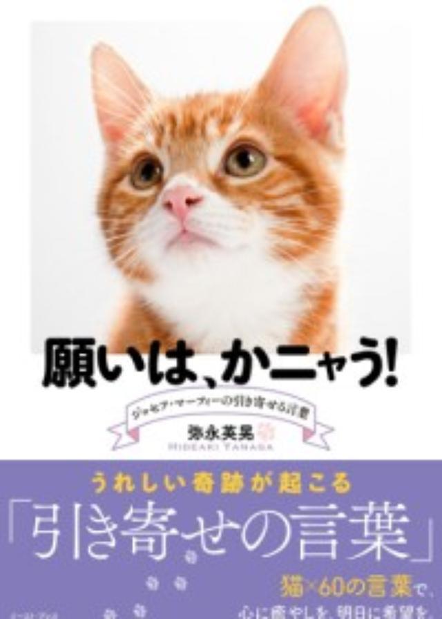 画像: 猫×ジョセフ・マーフィーの名言。心に癒やしを、明日に希望を――