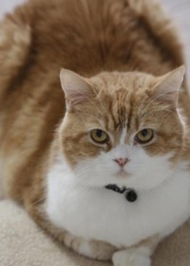 画像: 【画像あり】お相撲部屋で暮らす2匹の猫、モルとムギのあたたかな日常