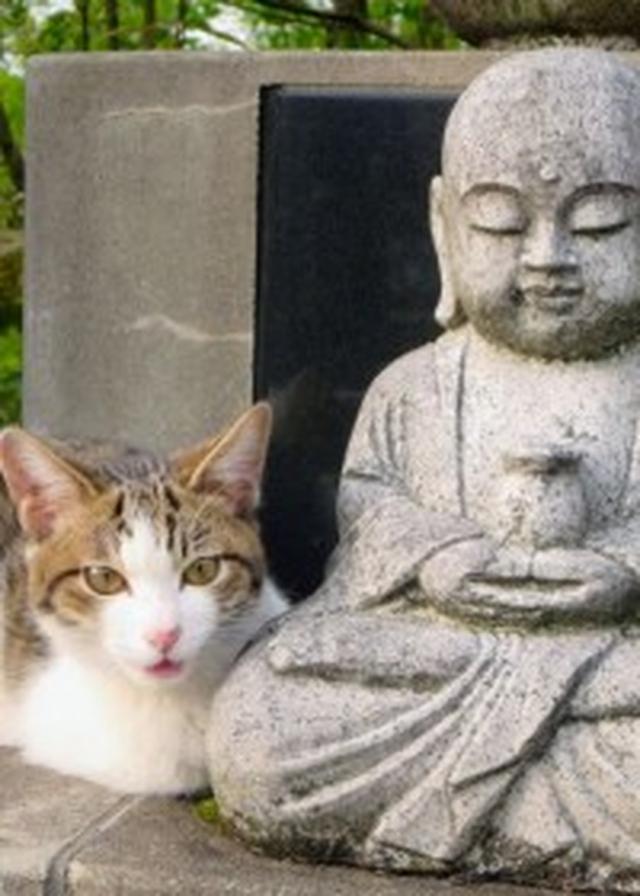 画像: 開祖誕生の地が、時を超えて猫の里親誕生の地『ねこでら』へ