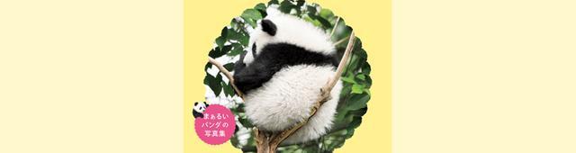 画像: まんまるな姿がかわいすぎる......! 大ブームを起こしたパンダの写真集第二弾!