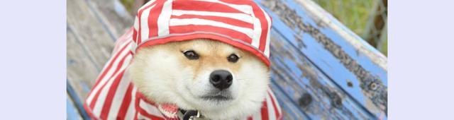 画像: 愛嬌たっぷりのTwitter犬・ハナちゃんの写真集でわんちゃんの心理を学ぼう!