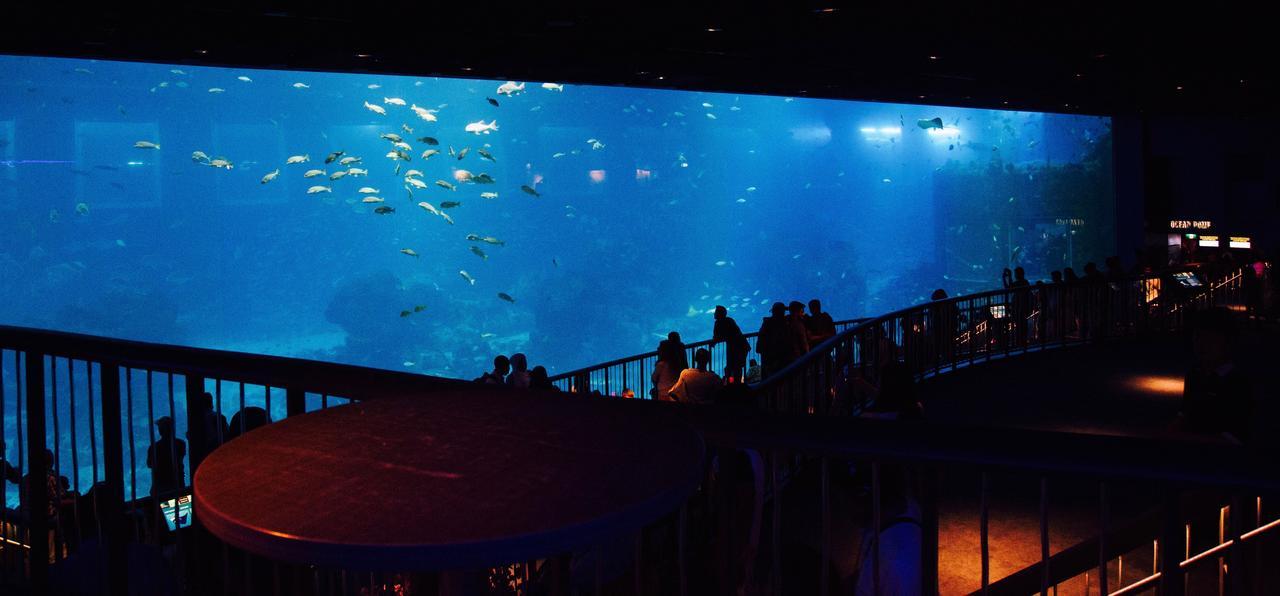 画像: 幅36m、高さ8.3mもある大パノラマ水槽「オープン・オーシャン」です。 ギネス・ブックの世界記録を2つ持った水族館。S.E.A.アクアリウム 1つ目が世界最大のアクリルパネルを使用した巨大な水槽! 2つ目が水族館そのものが世界最大と認められています。