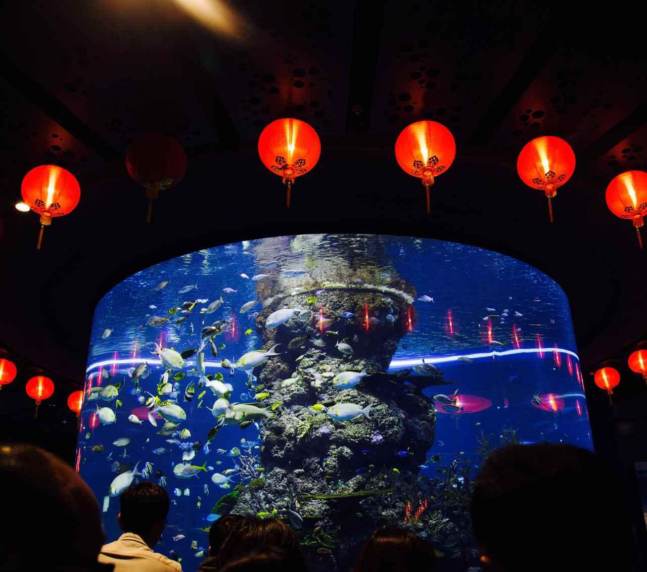 画像: 映画館で有名になった「ニモ=カクレクマノミ」を初め、 色とりどりのトロピカル・フィッシュが集結する水槽!