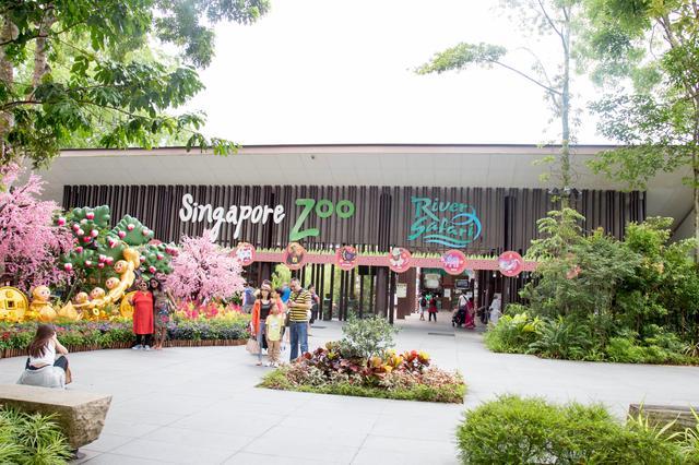 画像: シンガポールは摩天楼がそびえる国際都市なんですが、 自然と、そこに生息する野生生物の生態系も豊かなんです。 シンガポール動物園では、316種・3000頭を超える 動物が待ち受けています