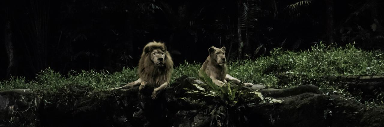 画像: ライオンでかっ! 感動のあまりカメラに収めたくなりますが、園内ではフラッシュ撮影禁止です。 しっかり目に焼き付けておきましょう。