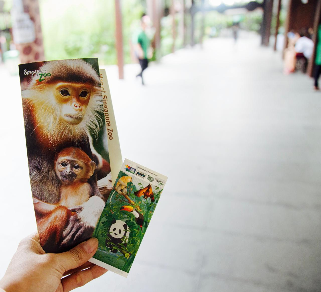 画像1: 「世界一美しい動物園」と称される シンガポール動物園です。
