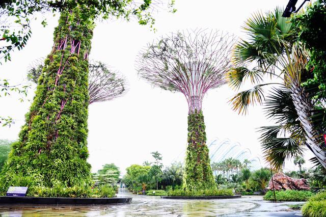 画像1: マリーナ・ベイにオープンした巨大な植物園「ガーデンズ・バイ・ザ・ベイ」
