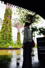 画像2: マリーナ・ベイにオープンした巨大な植物園「ガーデンズ・バイ・ザ・ベイ」