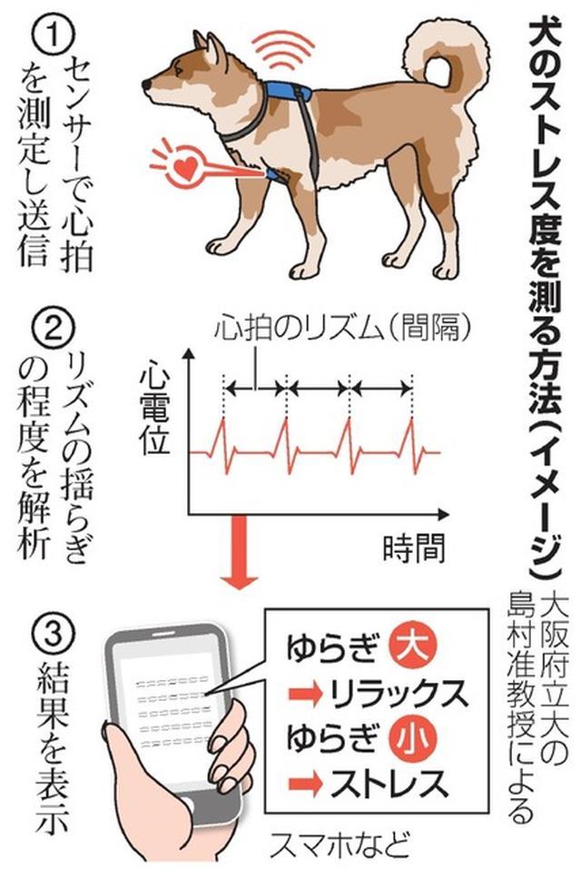 画像: 犬の心が分かる…かも 大阪府立大、心拍を手がかりに:朝日新聞デジタル