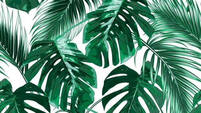 画像: 観葉植物が枯れてしまったのか、休眠しているのかを見分ける方法