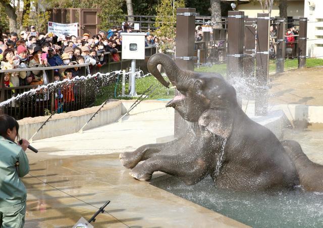 画像: サルは去り、ゾウが「温泉」に 京都市動物園でお目見え:朝日新聞デジタル