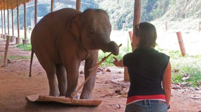 画像: ゾウの自己認識能力がすごい! 新開発された能力テストにもすべらない~